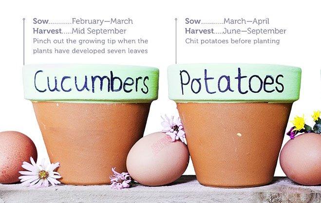 A Seasonal Guide to Planting
