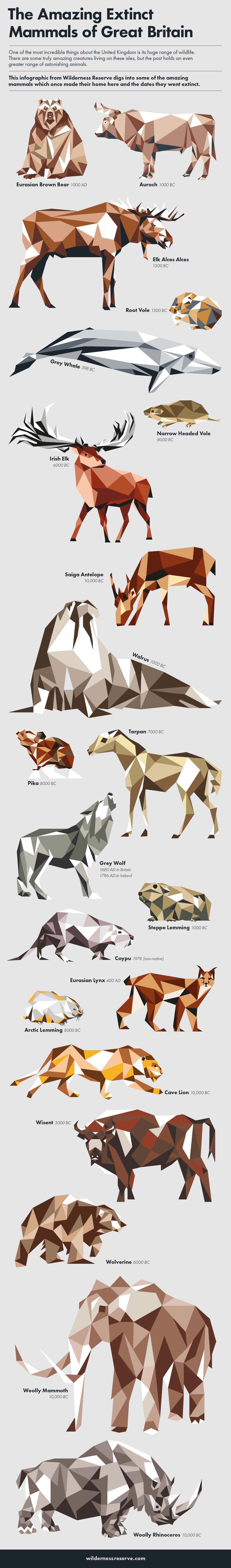 The extinct animals of great britain infographic